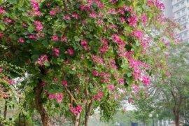 Bán hoặc thuê villa 5 phòng ngủ tại Quận Tây Hồ, Hà Nội