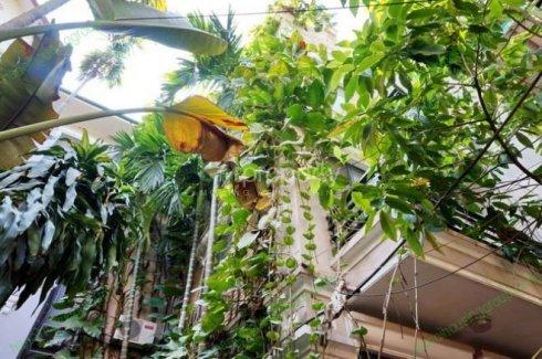 Cho thuê nhà riêng 5 phòng ngủ tại Giảng Võ, Quận Ba Đình, Hà Nội